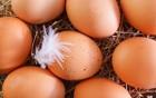 Eier auf dem Prüfstand
