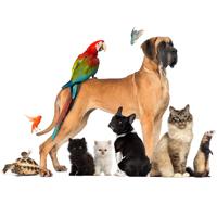Beratung rund ums Tier (Pferd, Hund und Katze)