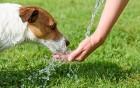 auch Haustiere schützen