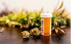 Cannabis – von der Droge zum Medikament