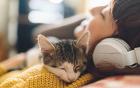 Haustiere können Krankheiten übertragen
