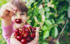 Süß und gesund