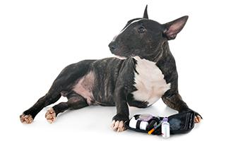 Tiere und Diabetes