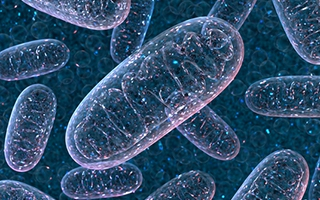 Mitochondrien - die Energiemanager in unseren Zellen