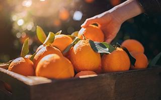 Zitrusfrüchten gegen die Sommerhitze