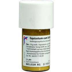 EQUISETUM CUM Sulfure tostum D 6 Trituration