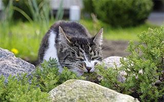 Tierisch schlau: Unsere Mitgeschöpfe nutzen Heilkräuter