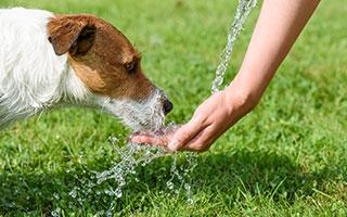 Bei Sommerhitze auch Haustiere schützen